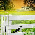 White Gate Cat by Diana Angstadt