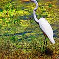 White Heron 1 by Donna Bentley
