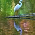 White Heron by Greg Hammond