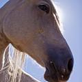 White Horse by Dustin K Ryan