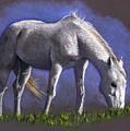 White Horse Grazing by Joyce Geleynse