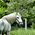 White Horse In A Green Pasture by Wilma Birdwell