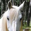 White Horse by Jocelyn Friis