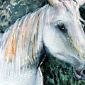 White Horse by Mindy Newman