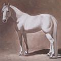 White Horse Study by Oksana Zotkina