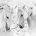 White Horses No 01 by Maria Astedt