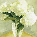 White Hydrangeas Morning Light by Beverly Brown