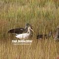 White Ibis 3455 by Captain Debbie Ritter