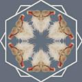 White Ibis Snowflake by Rhoda Gerig