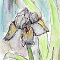 White Iris by Christopher O'Kelley
