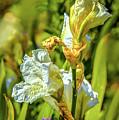 White Iris #g4 by Leif Sohlman
