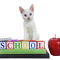 White Kitten Back To School by Sheila Fitzgerald