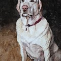 White Mixed Labrador Retriever by Christopher Shellhammer