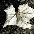 White Leaf On The Ground by Mariola Bitner