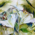 White Lilies by Jane Bogdanchyk