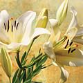 White Lilies On Amber by Robert Masheris