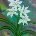 White Lilies by Suma GV