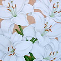 White Lilies by Terri Meyers