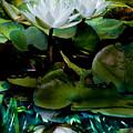 White Lilies, White Reflection by Paula Ponath