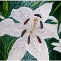White Lillies by Brenda L Spencer