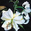 White Lily by Leyla Munteanu