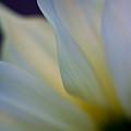 White Linen by Mike Reid