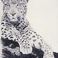 White Loepard by Brett Cremeens
