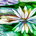 White Lotus In The Pond by Jeelan Clark