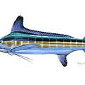 White Marlin by Carey Chen