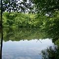 White Mill Park - Summer 2 by Erin Rosenblum