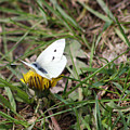 White Moth by Douglas Milligan