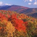 White Mountain Foliage Bear Notch by John Burk