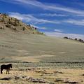 White Mountain Horse by Eric Rosenwald