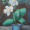 White Orchid by Alfons Niex