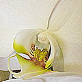 White Orchid by Bonita Brandt
