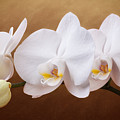 White Orchid Flowers And Bud by Tom Mc Nemar