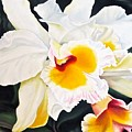White Orchid by Janice Petrella-Walsh