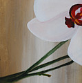 White Orchid Light Background First Section by Catt Kyriacou