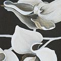 White Orchid Middle Section by Catt Kyriacou