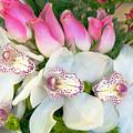 White Orchids by Galina Savina
