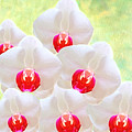 White Orchids by Laura D Young