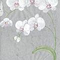 White Orchids On Sprigs  by Marja Koskinen-Talavera