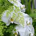 White Orchids by Ronda Broatch