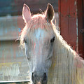 White Painted Horse by Trish Tritz
