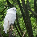 White Parrot by Emily Kelley