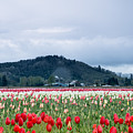 White Pass Highway With Tulips by E Faithe Lester
