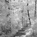 White Path by Dan Urban