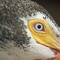 White Pelican Eye by Terri Mills