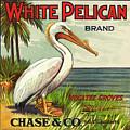 White Pelican Fruit Crate Label C. 1920 by Daniel Hagerman