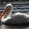 White Pelican . Ripple Waters by Wingsdomain Art and Photography